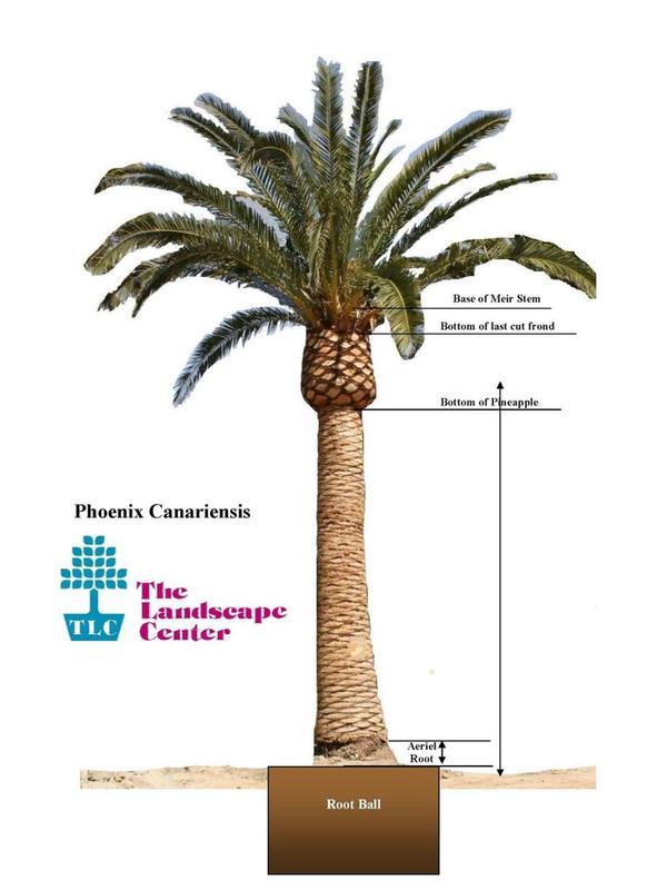 Palm Measuring Diagram