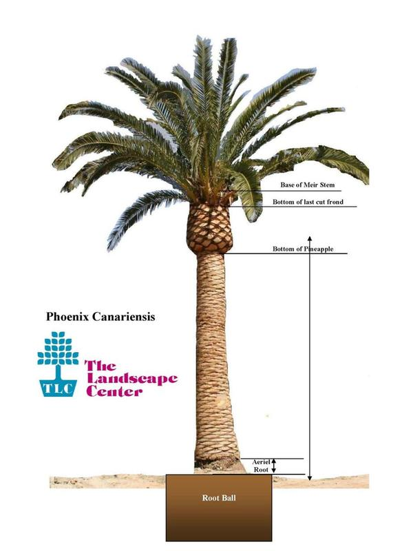 Palm Measuring Diagram