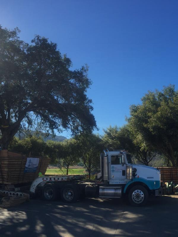 Tree Relocation Tree Boxing Tree Salvage Oak Tree California