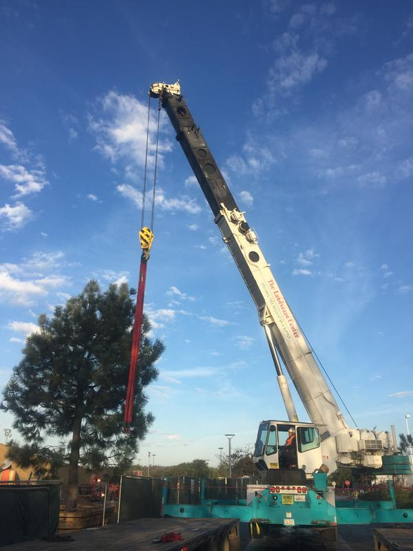 Tree Services Throughout California & Nevada